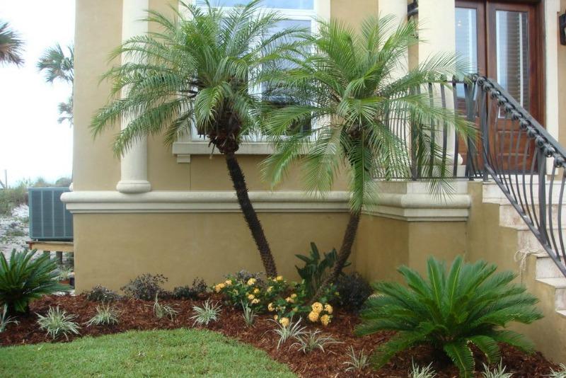 palmeras para el jard n guia de jardin