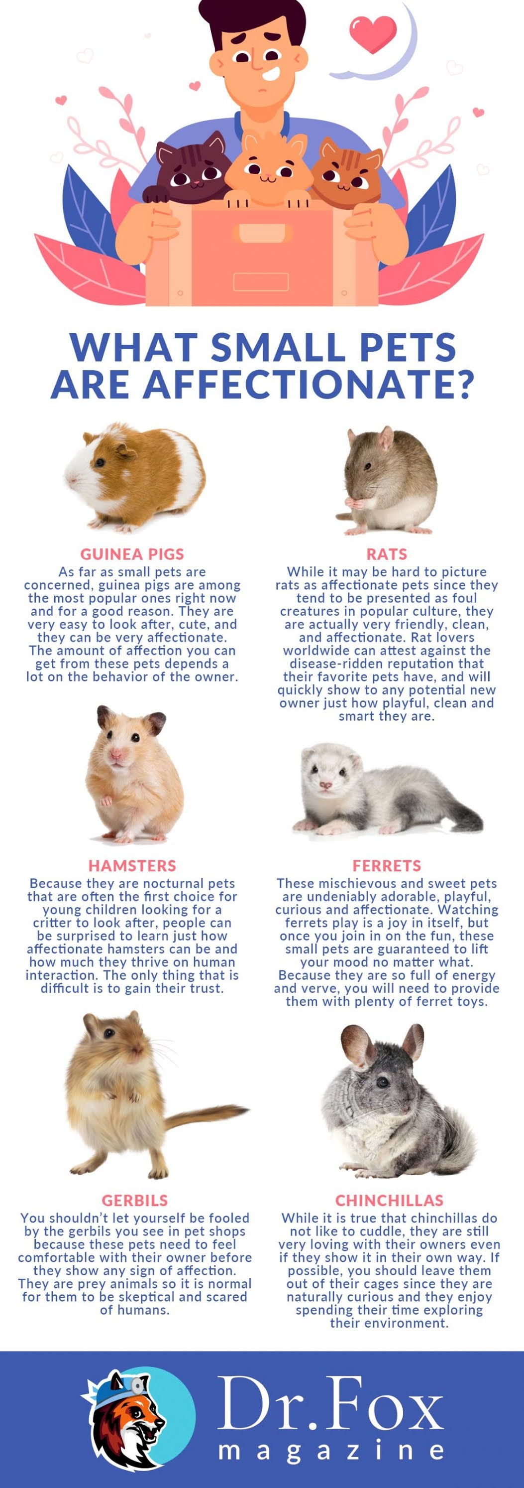 What Small Pets Are Affectionate? #infographic