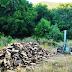 Παράνομη υλοτομία στο δάσος Δελβινακίου