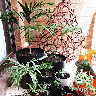 Selection of potted plants grouped on a balcony fllor, next to a half-used bag of potting mix, a couple of empty pots and several stalks of spider-plant pups. In the background is a large pear made from old horseshoes.