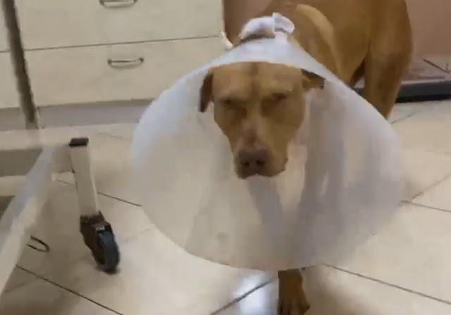 Σε διαθεσιμότητα ο υπάλληλος της ΔΕΗ για το βασανισμό του σκύλου στην Κρήτη