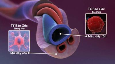 lưu trữ tế bào gốc máu và cuống rốn