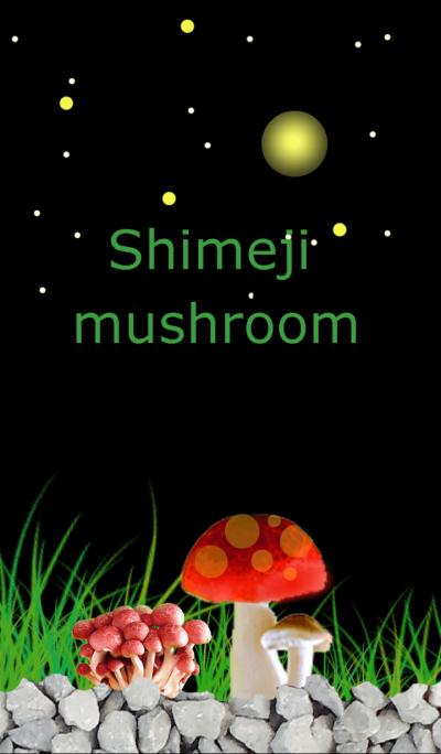 Night sky and mushrooms