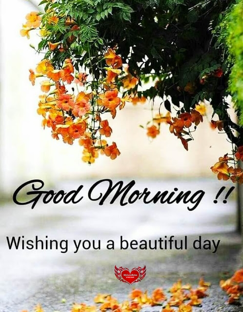 Sweet Morning Love Messages for Beautiful Day|Romantic Good Morning Quotes for Her
