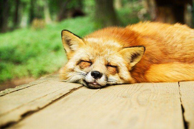Sleep Well And Minimize Stress Level