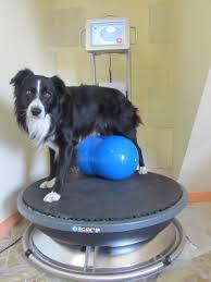 osciladores especiais para cães