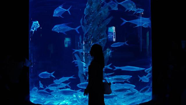 pengalaman di jakarta aquarium