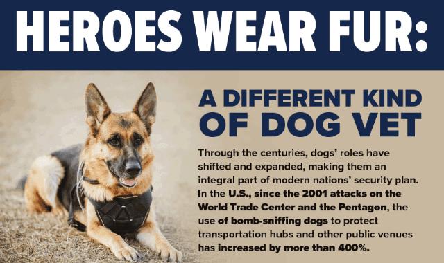 Heroes Wear Fur