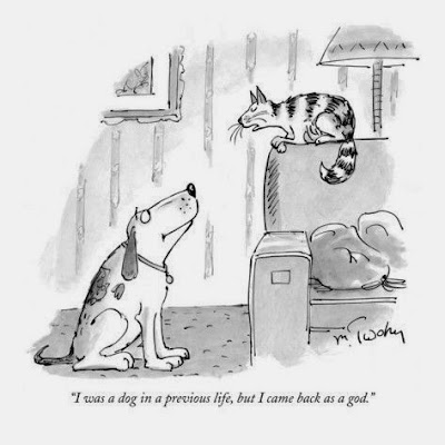 Funny reincarnation cat joke cartoon picture - I was a dog in a previous life, but I came back as a god