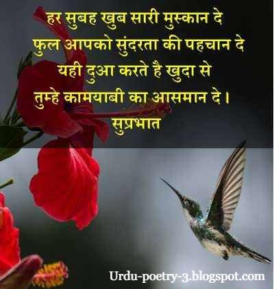 good morning message in English & Hindi  for WhatsApp