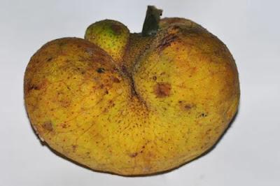 Monkey Fruit - Monkey fruit in Hindi