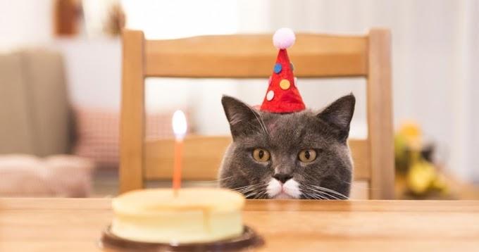 HOY EN IDIOTAS SIN FRONTERAS: 15 contagiados por COVID 19 tras asistir a la fiesta de cumpleaños de un gato.
