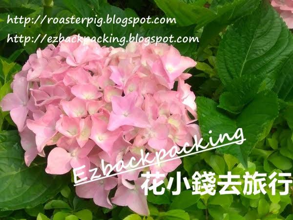 香港繡球花