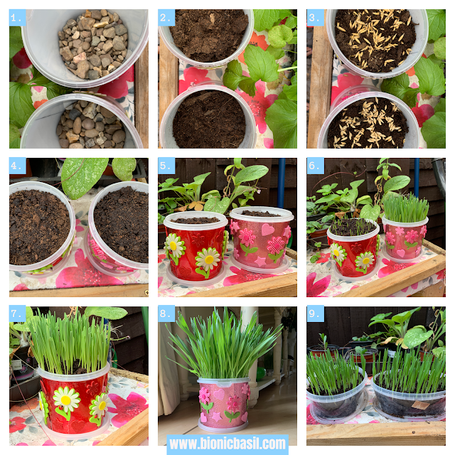 Crafting with Cats ©BionicBasil® How To Make Cute Pots For Your Cat Grass a