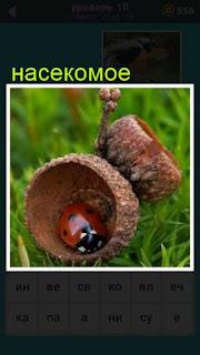 насекомое сидит в скорлупе от желудя 667 слов 10 уровень