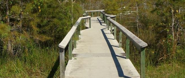 Boardwalk o pasarela sobre los pantanos
