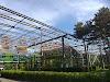 FOTO/ Ce trebuie să știți despre serele din Parcul Drumul Taberei