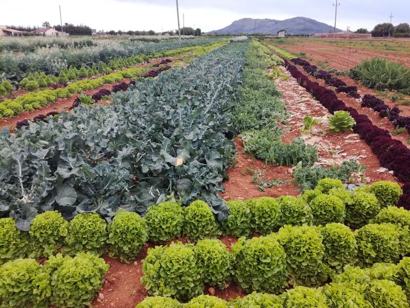 Campi agricoli a Maiorca