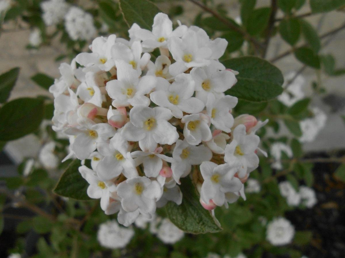 The Lucas Countyan Spring bouquet