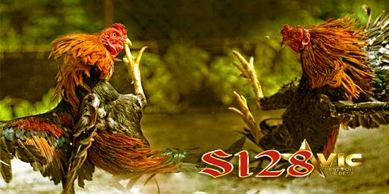 s1248 ayam sabung