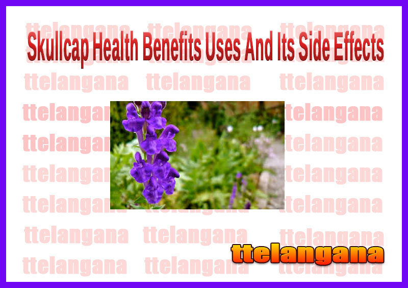 Skullcap Health Benefits Uses And Its Side Effects