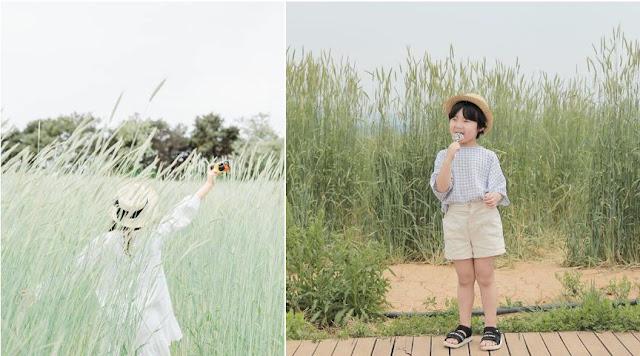 Khắp Hàn Quốc có nhiều vườn hoa lớn cho bạn cơ hội thưởng thức vẻ đẹp của loài hoa này. Nếu không may đến đất nước này vào thời điểm trái mùa, bạn vẫn có thể chụp được nhiều ảnh đẹp với những cánh đồng cải xanh mướt đang chờ chút nắng hè để trổ hoa. Những cánh đồng lau xung quanh cũng là nơi lý tưởng để thả dáng, chụp những tấm ảnh đậm màu sắc cây cỏ.