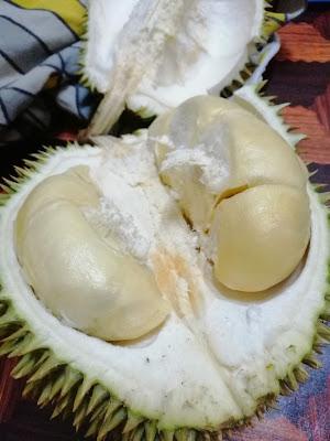 mantin durian gemuk, durian gemuk, durian mantin, harga durian mantin, mantin durian farm mantin negeri sembilan, durian murah negeri sembilan, durian udang merah mantin