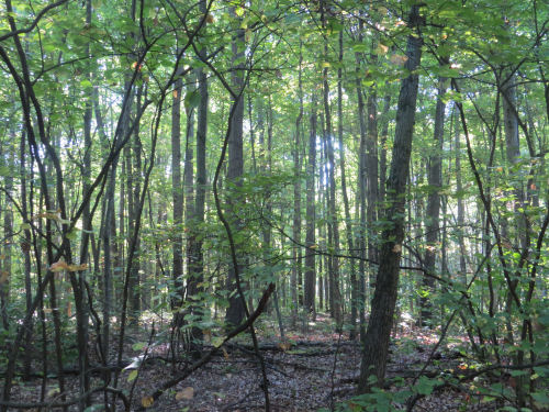 Maumee State Forest
