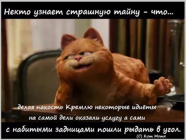 Блог Кота Моти  Ee0Q_myWkAAQDAn