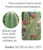 tumbuhan gurun