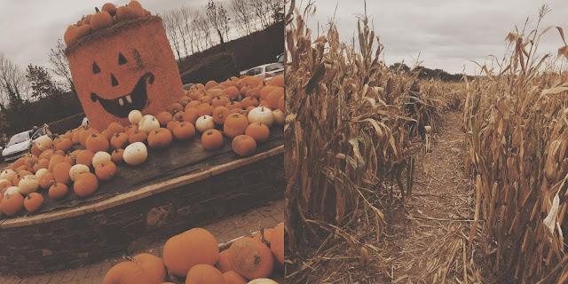 pumpkin display and maze