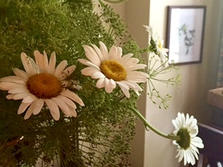 Daisies and dill keep company in a pitcher.