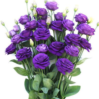y nghia hoa cat tuong trong tinh yeu