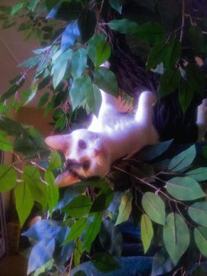 Beautiful Cat Trees