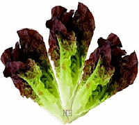 Red Leaf Lettuce Health Nutrition