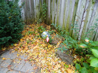 Fall Cleanup Bedford Park Backyard Before by Paul Jung Gardening Services--a Toronto Gardening Company