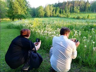 Kaksi henkilöä on kyykistynyt pellon reunaan kuvaamaan voikukkien haivenpalloja ilta-auringossa.