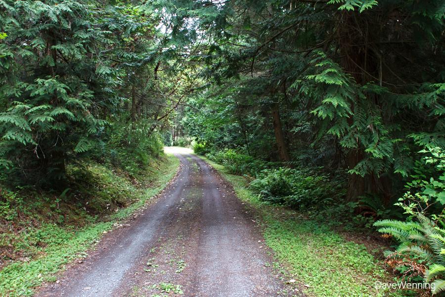 Main Roadway, Kukutali Preserve