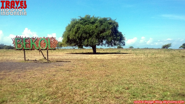 Baluran is nicknamed Africa Van Java or Little Africa