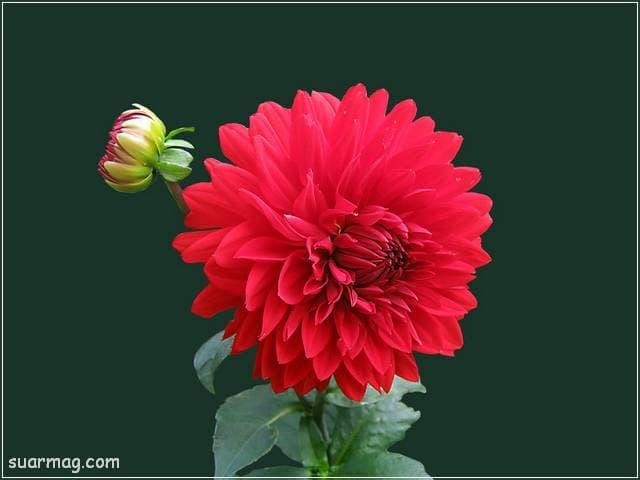 صور زهور 12 | Flowers Images 12
