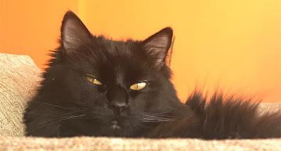 Factores que hacen a la personalidad de tu gato