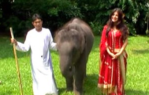 Naughty Elephant Prank with Shenaz – FUNNY VIDEO