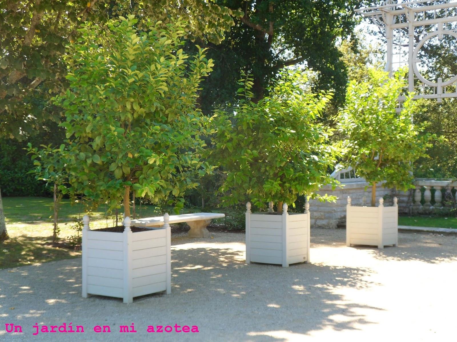 Un jardín en mi azotea: UN JARDÍN PARA EDMOND ROSTAND