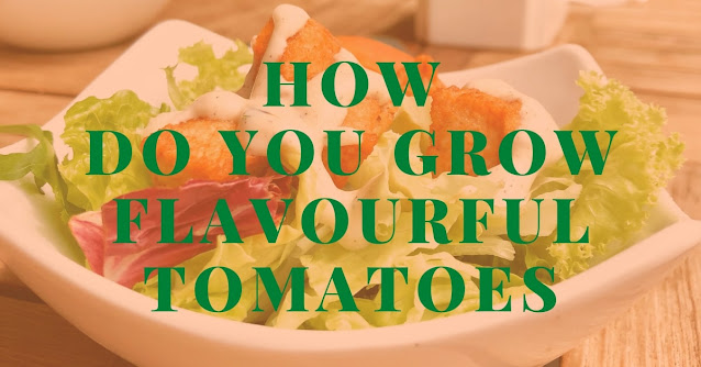 How do you grow flavorful tomatoes