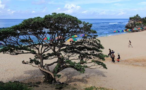 menengok-satu-satunya-pohon-di-pantai-pok-tunggal