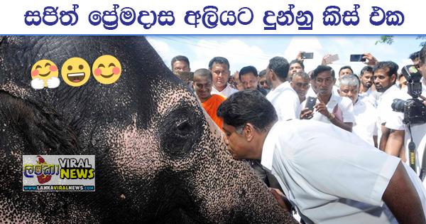 sajith premadasa elephant kiss