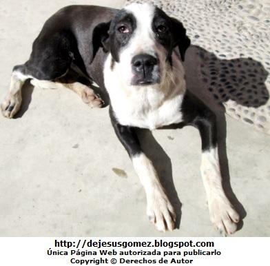 Foto de perro con mirada triste (Color blanco y negro). Foto de perro tomada por Jesus Gómez