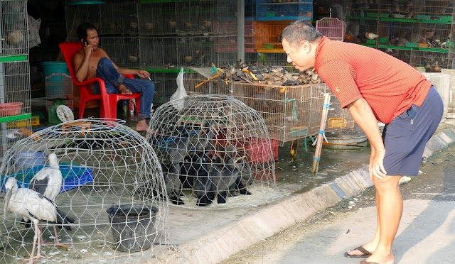 Nổi da gà dạo chợ chim chuột ở Thạnh Hóa - Long An