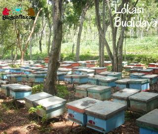 Persiapan Perlengkapan dan Lingkungan Budidaya Lebah Madu