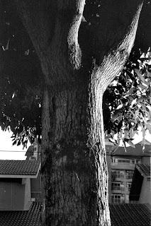 Nikon Zoom 310 AF QD Panorama 04